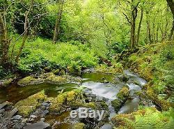 Forêt Torrent, Paysage 3d Peinture Murale Photo Wallpaper Décor Background Paper Poster