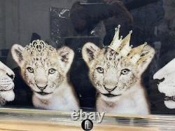 Grande Fierté Lion De La Photo De Mur De La Famille Dans Cadre Miroir, Famille Lion